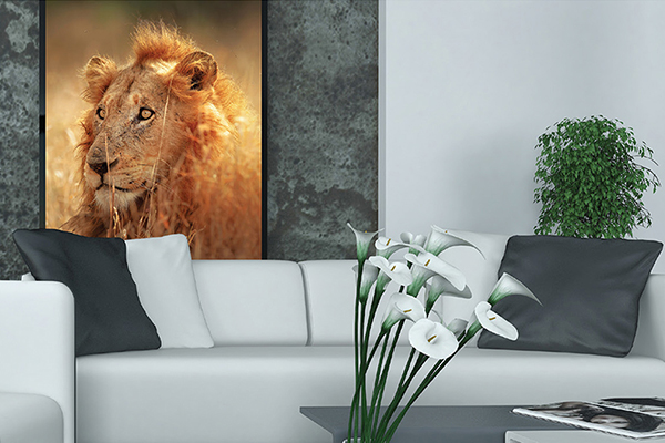 Lion print box mount hanging on wall