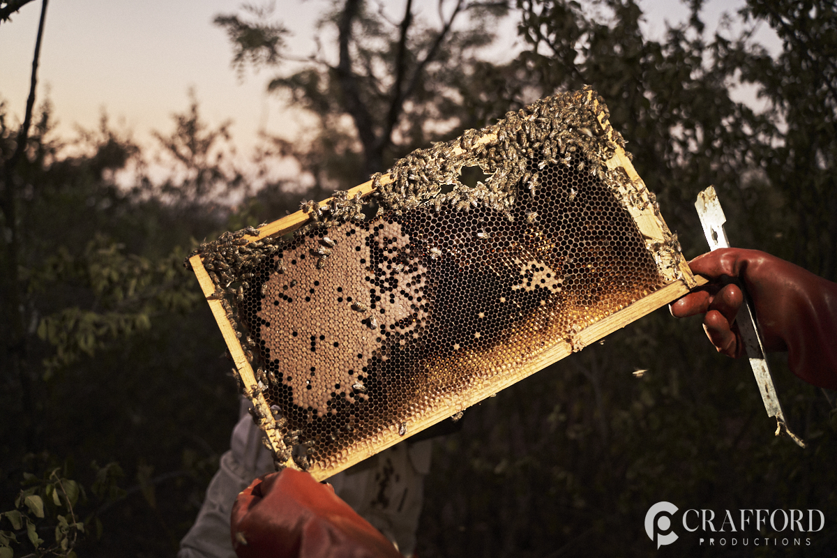 Commercial Photography Bee removals
